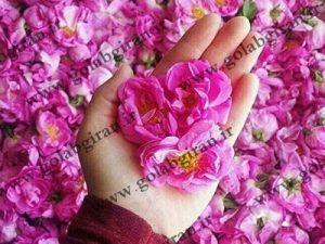 گلاب دو آتشه قمصر