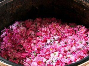 خرید و فروش گلاب تشریفات