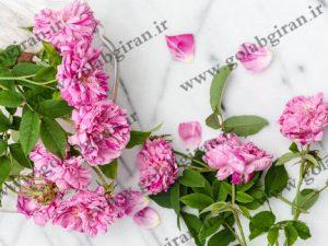 مرکز خرید گلاب فرشته