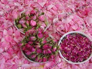 مرکز پخش گلاب اصل کاشان