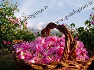 فروشنده گلاب زهرا مرغوب