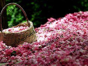 خرید و فروش گلاب حبیب